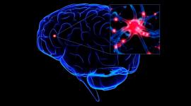 Алкогольная энцефалопатия головного мозга: признаки, последствия и прогноз