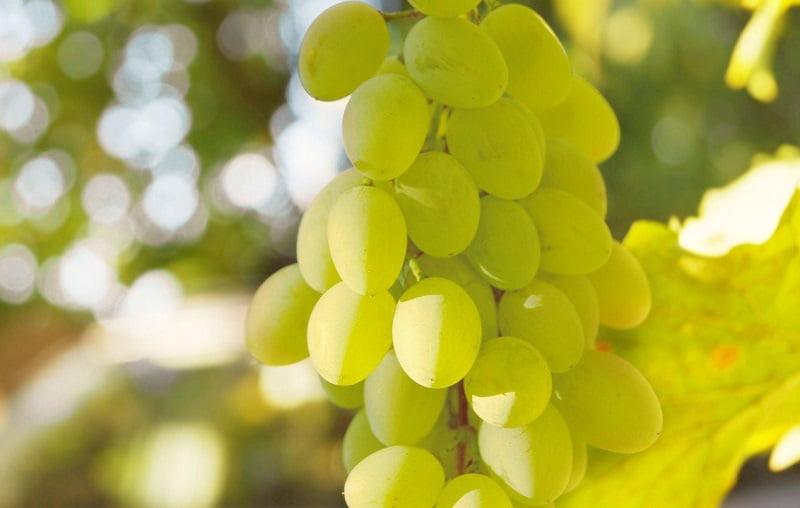 Рецепт белого вина