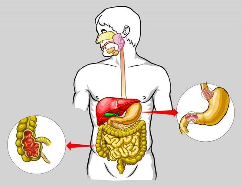 Алкоголь и пищеварительная система