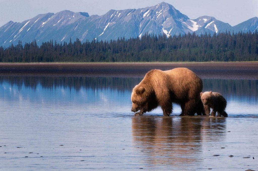 Закон для борьбы с алкоголизмом в Аляске